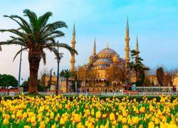 Весенний Фестиваль тюльпанов в Стамбуле — Турция